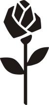Rose noire Seidensticker