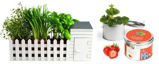 Mini Jardin & Fraise en pot